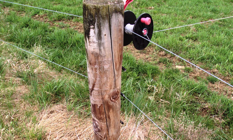 round wooden post with three wires coming out a different angles (as if it makes the corner of several paddocks)