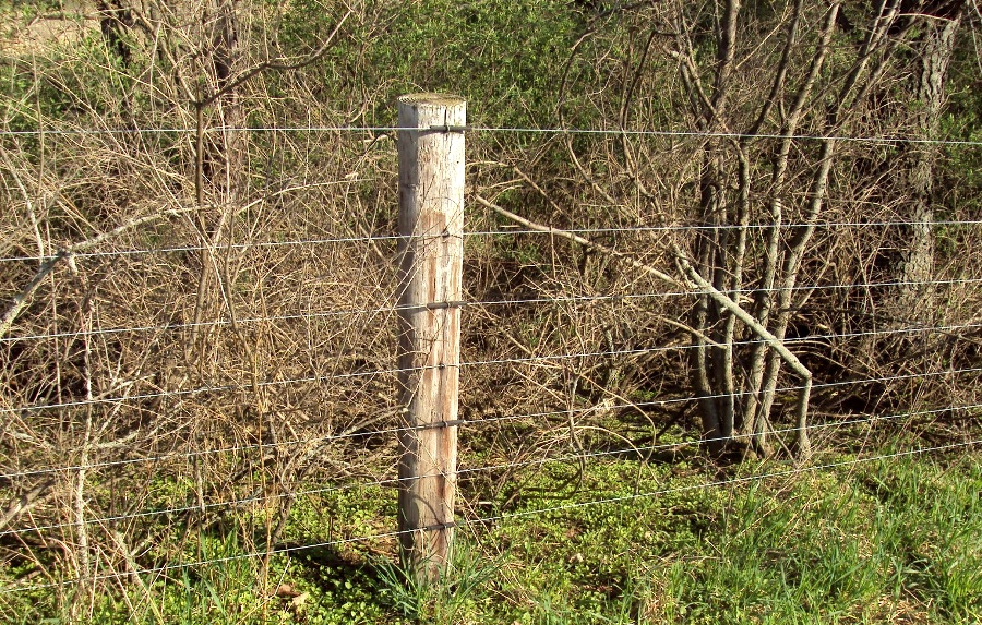 Fence with wooden posts and thin wires